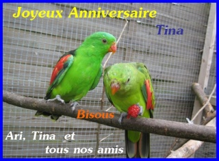 Joyeux Anniversaire Tina22 A1-ari10