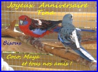 Joyeux Anniversaire Tina22 A1-coc10