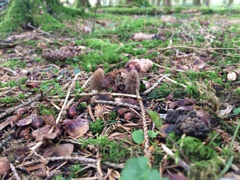 Les champignons , ( girolles , cèpes , morilles ) etc ...  - Page 43 17909511