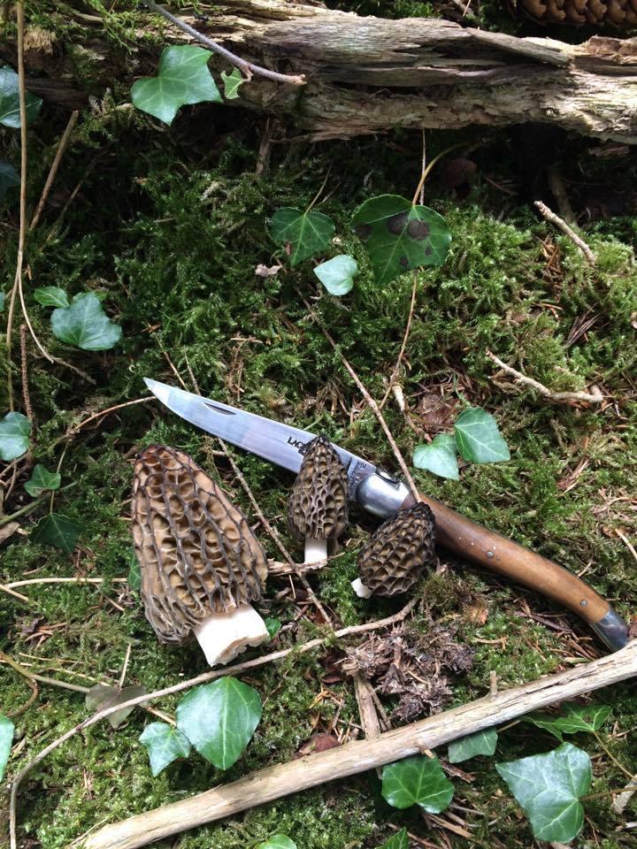 Les champignons , ( girolles , cèpes , morilles ) etc ...  - Page 43 17910810