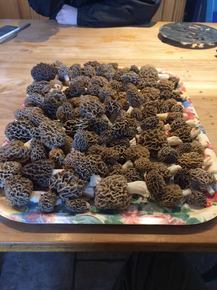 Les champignons , ( girolles , cèpes , morilles ) etc ...  - Page 43 17910910