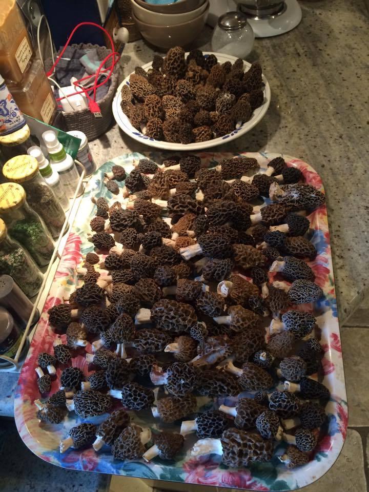 Les champignons , ( girolles , cèpes , morilles ) etc ...  - Page 43 17911010