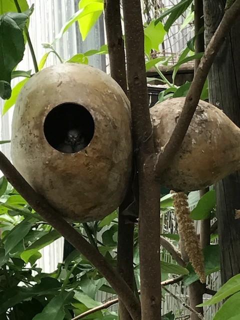 nid de cecilies Img_2710