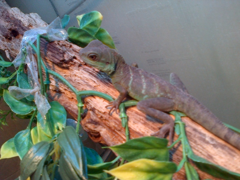 mon dragon d'eau  Physi11