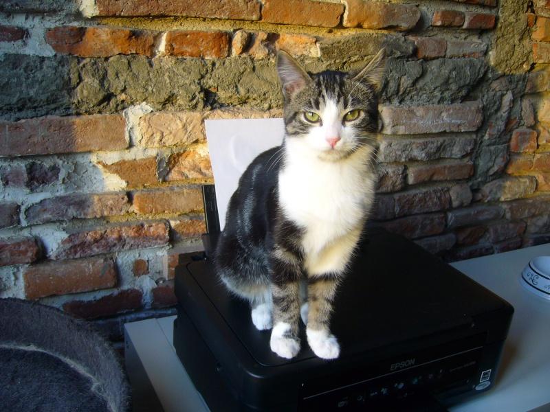 Les chats à adopter qui s'entendent avec les chiens P1130513