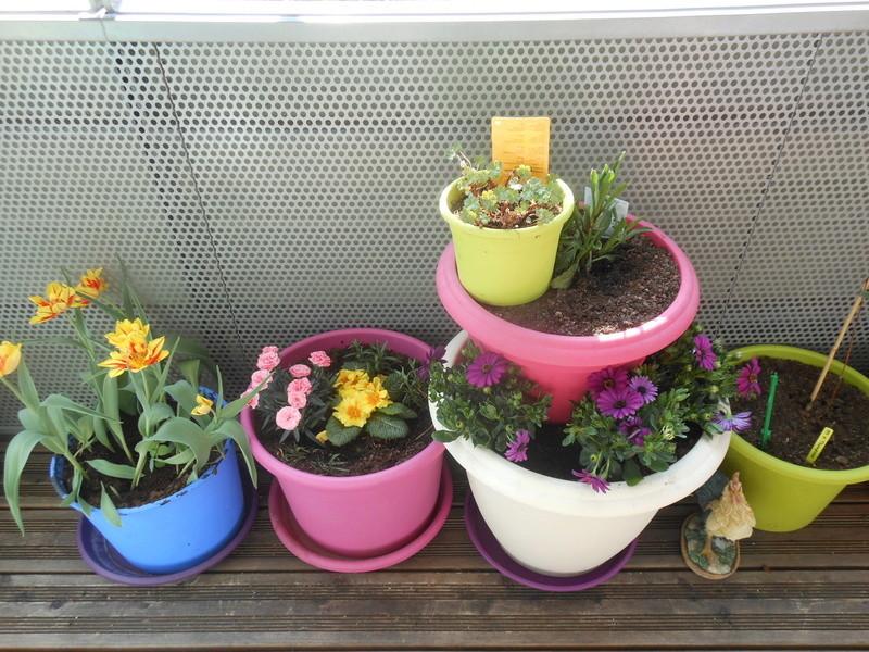 Les fleurs de mon balcon  Dscn6513