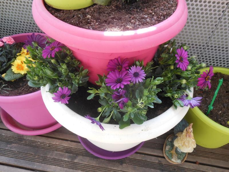 Les fleurs de mon balcon  Dscn6514