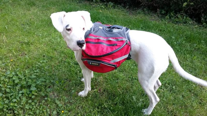 [Retex/Review] Sac de bât pour chien 20140517