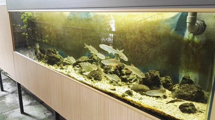 l'Aquario-Club nord-Meusien ouvre ses portes le Samedi 15 avril  17918210
