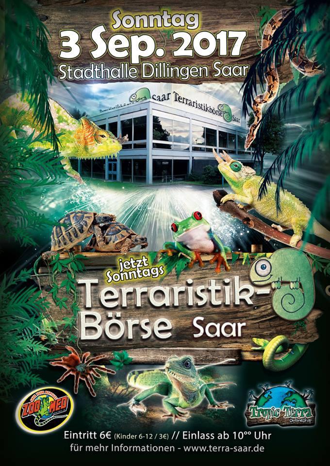 Terraristik Börse DILLINGEN (DE) - 3 septembre 2017 Dillin10