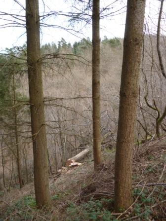 Photos de Débardage de bois énergie avec des chevaux  Bois_d10