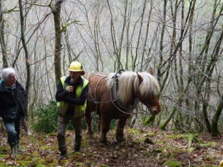 Photos de Débardage de bois énergie avec des chevaux  Bois_d12
