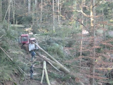 Photos de Débardage de bois énergie avec des chevaux  Bois_d13
