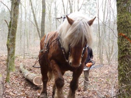 Photos de Débardage de bois énergie avec des chevaux  Bois_d14