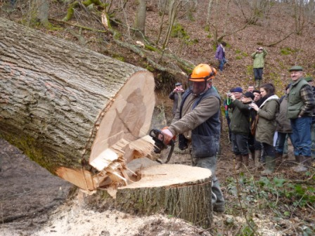 Photos de Débardage de bois énergie avec des chevaux  Bois_d15
