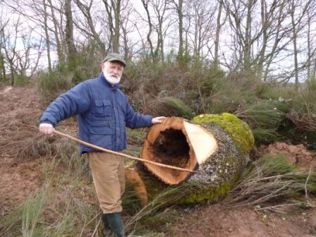 Photos de Débardage de bois énergie avec des chevaux  Bois_d16