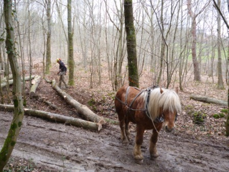 Photos de Débardage de bois énergie avec des chevaux  Bois_d18