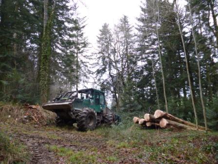 La France ne récolte pas assez de bois ?! Faux et Vrai ...  P1000510
