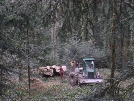 Photos de Débardage de bois énergie avec des chevaux  P1000515