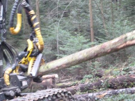 La France ne récolte pas assez de bois ?! Faux et Vrai ...  P1000624