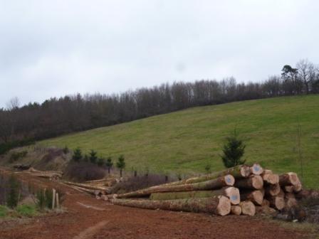 Photos de Débardage de bois énergie avec des chevaux  P1000626