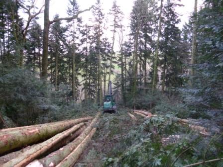 Photos de Débardage de bois énergie avec des chevaux  P1000628
