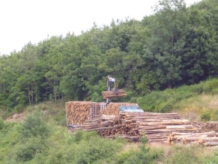 Photos de Débardage de bois énergie avec des chevaux  P1000910