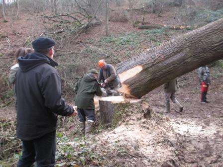 Photos de Débardage de bois énergie avec des chevaux  Varifi10