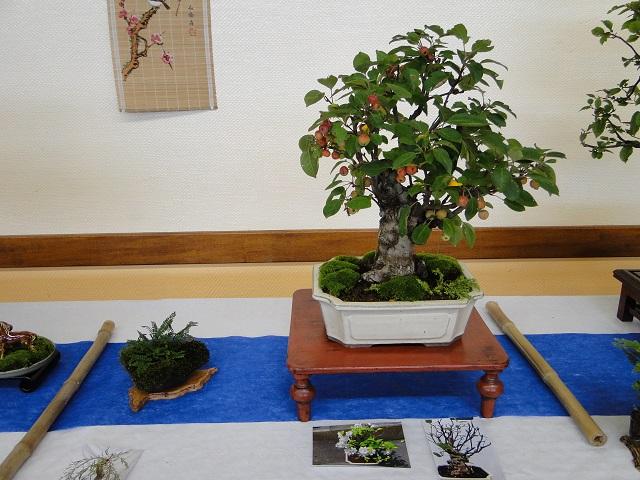 fête des plantes  00510