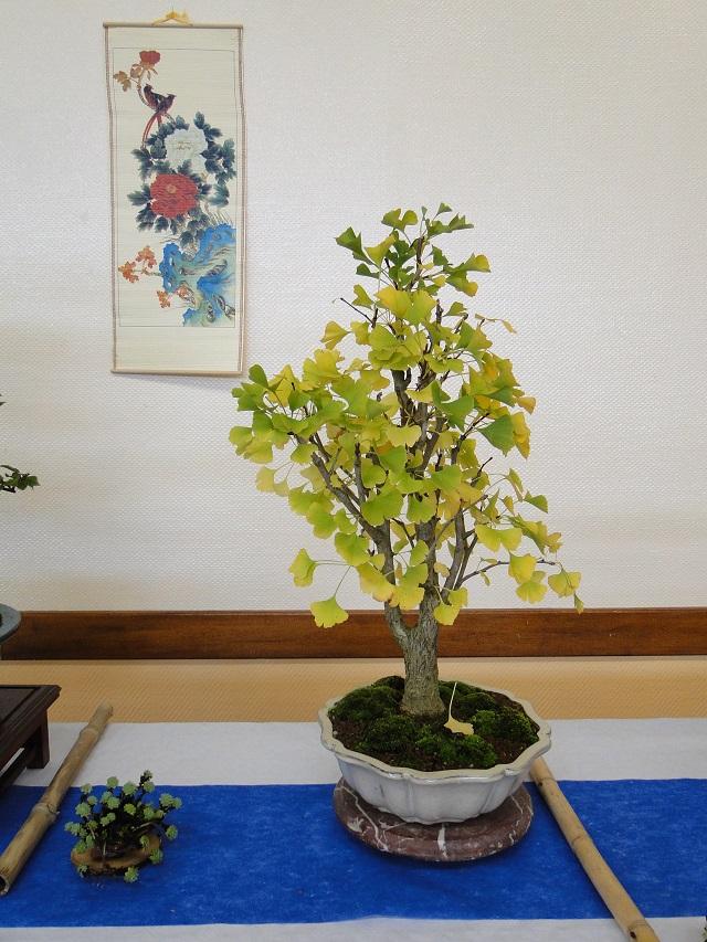 fête des plantes  00710