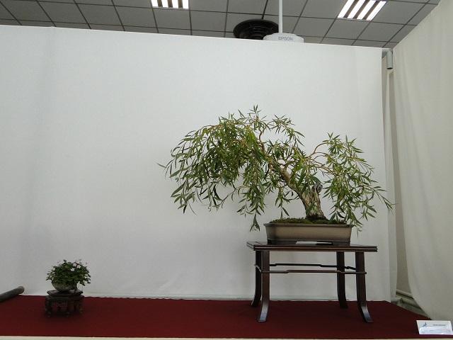 congrés national au floralies de nantes  Dsc05015