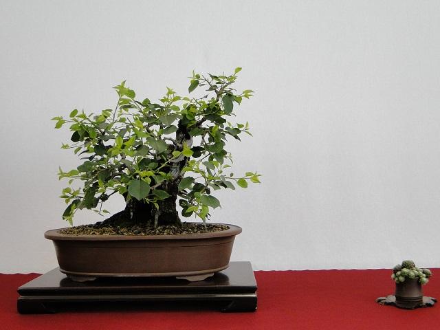 congrés national au floralies de nantes  Dsc05018