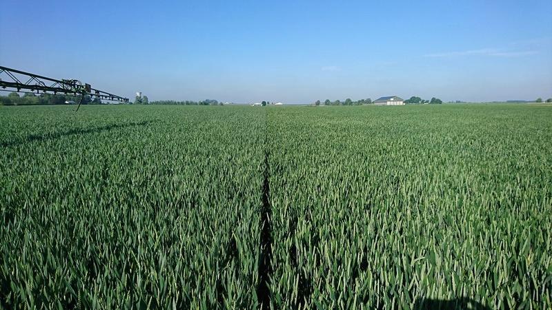 suivi des blés tendre 2017 18700810