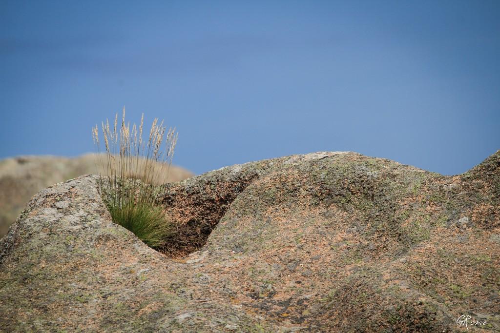 La côte de granit Rose  Plouma12