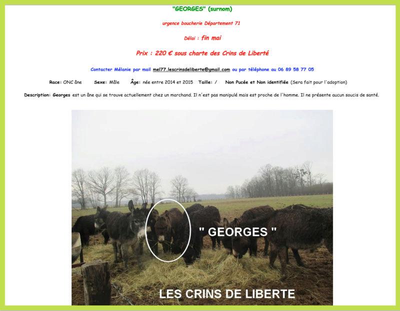 (Dept 71) Fonzy dumarais - ONC âne - Réservé par Christel et Mireille (oct 2017) Captur34