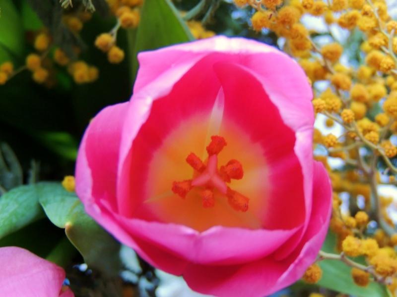 Фотографии цветов и деревьев Dscn0010