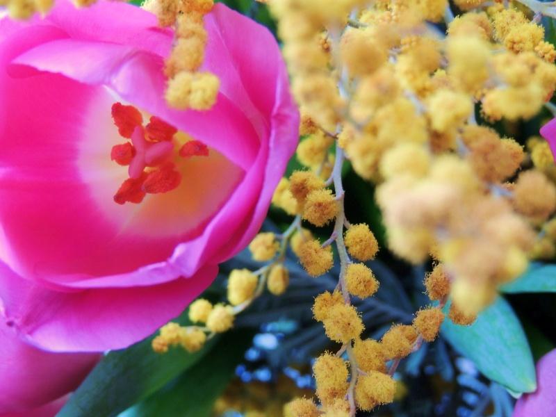 Фотографии цветов и деревьев Dscn0011