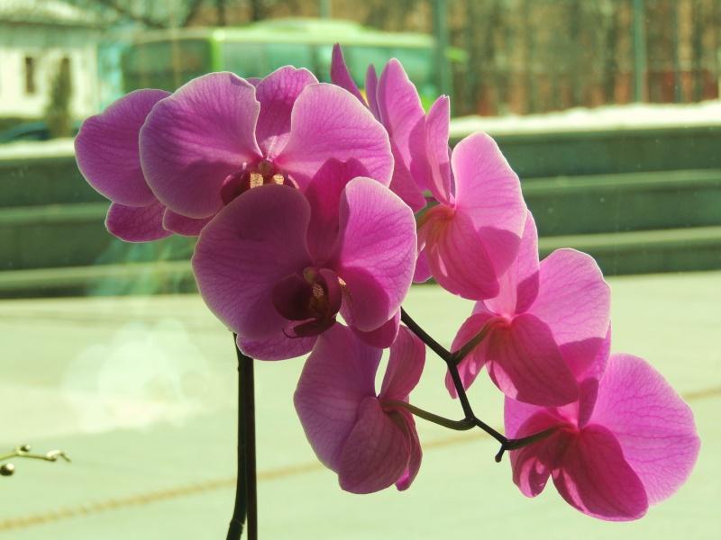 Фотографии цветов и деревьев Dscn0810