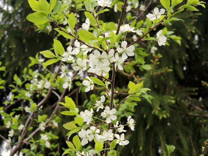 Фотографии цветов и деревьев Dscn1411