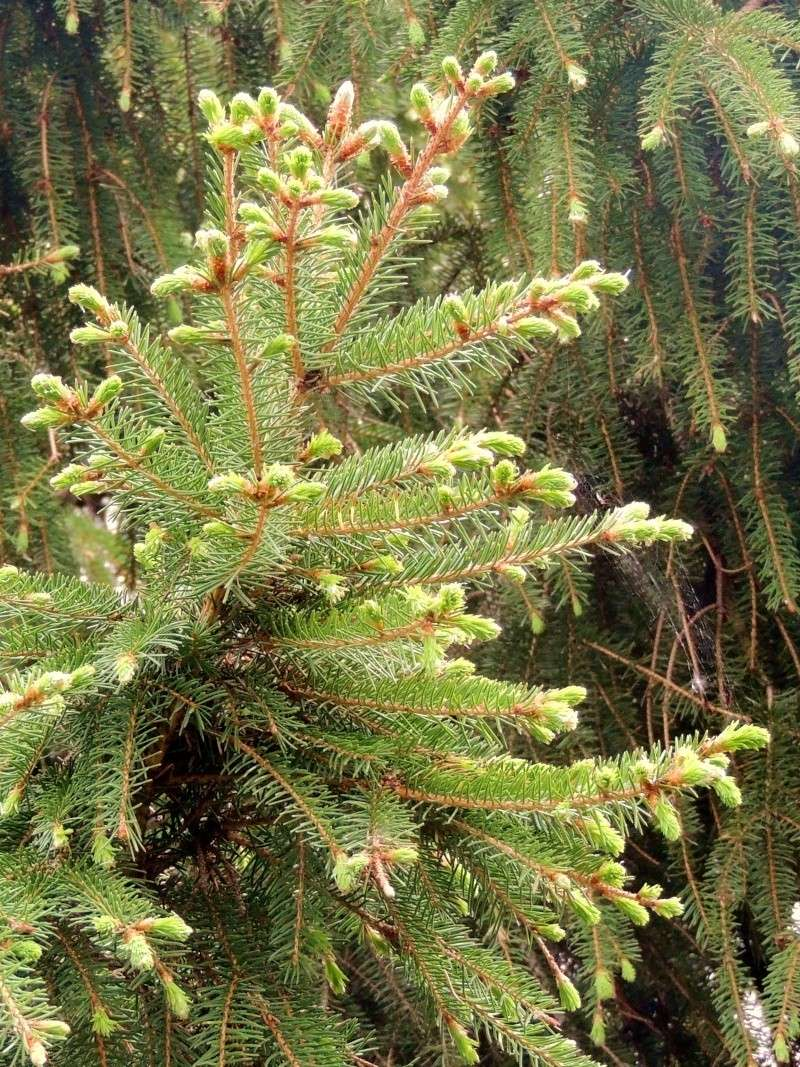 Фотографии цветов и деревьев Dscn1412
