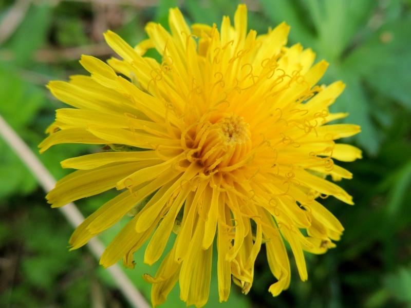 Фотографии цветов и деревьев Dscn1413