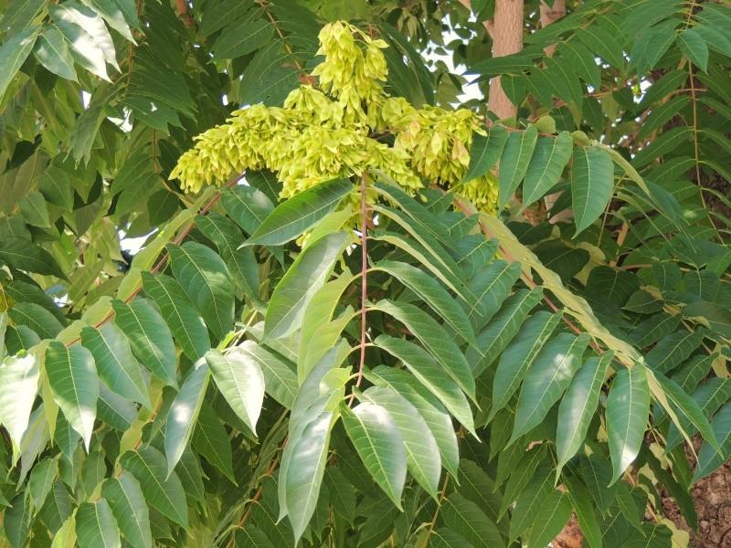 Фотографии цветов и деревьев Dscn2414