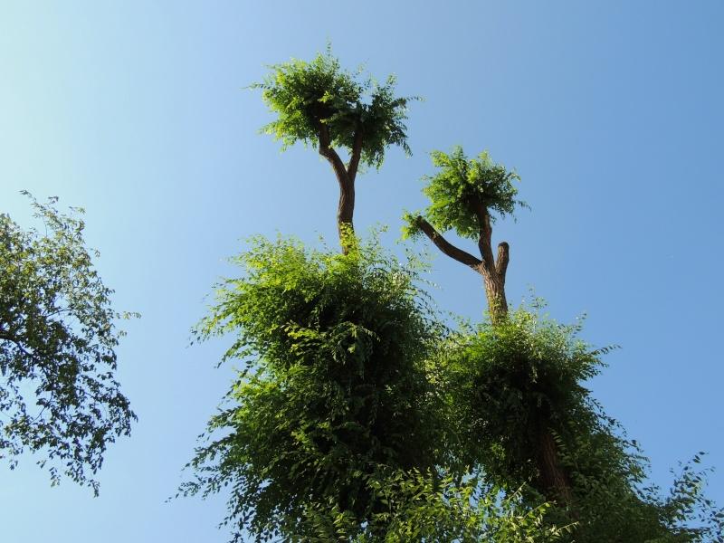 Фотографии цветов и деревьев Dscn2511