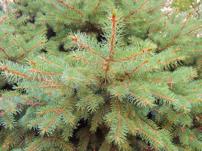 Фотографии цветов и деревьев Dscn2617