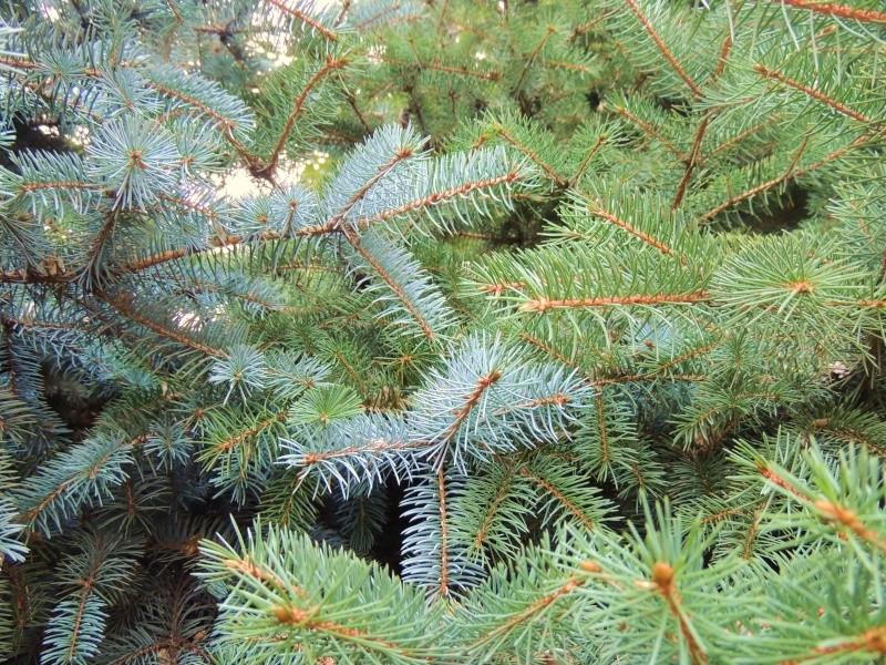 Фотографии цветов и деревьев Dscn2618