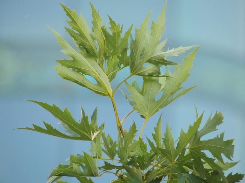 Фотографии цветов и деревьев Dscn2619