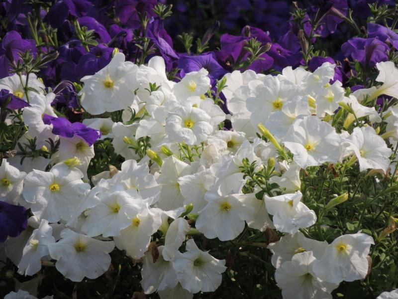 Фотографии цветов и деревьев Dscn3619
