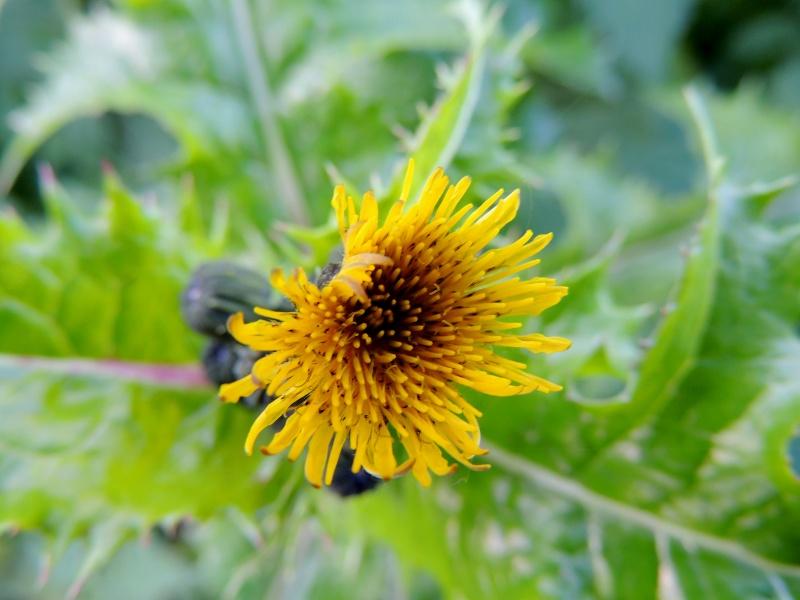 Фотографии цветов и деревьев Dscn5014