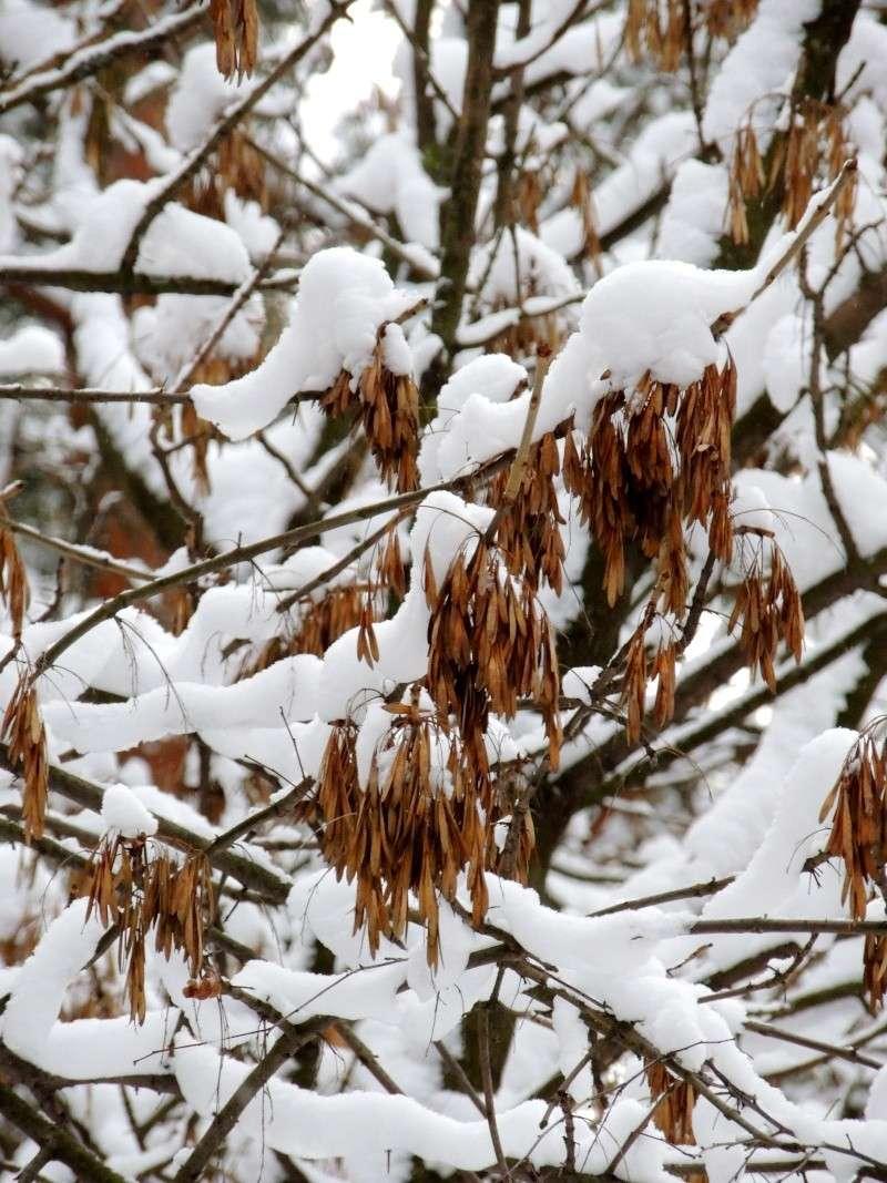 Фотографии цветов и деревьев Dscn5710
