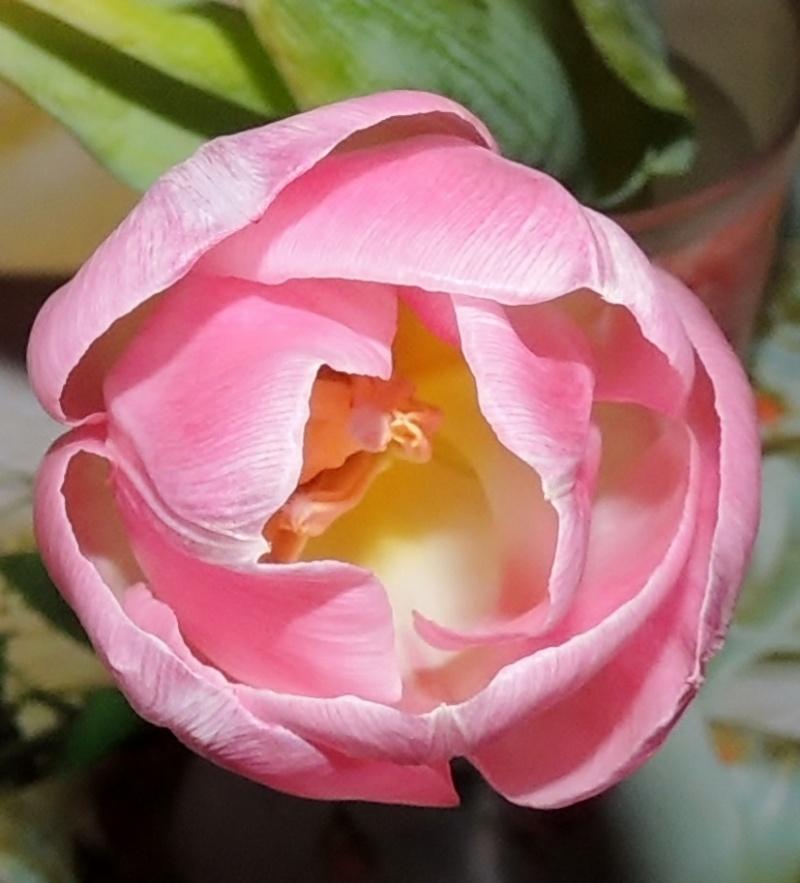 Фотографии цветов и деревьев Dscn6411